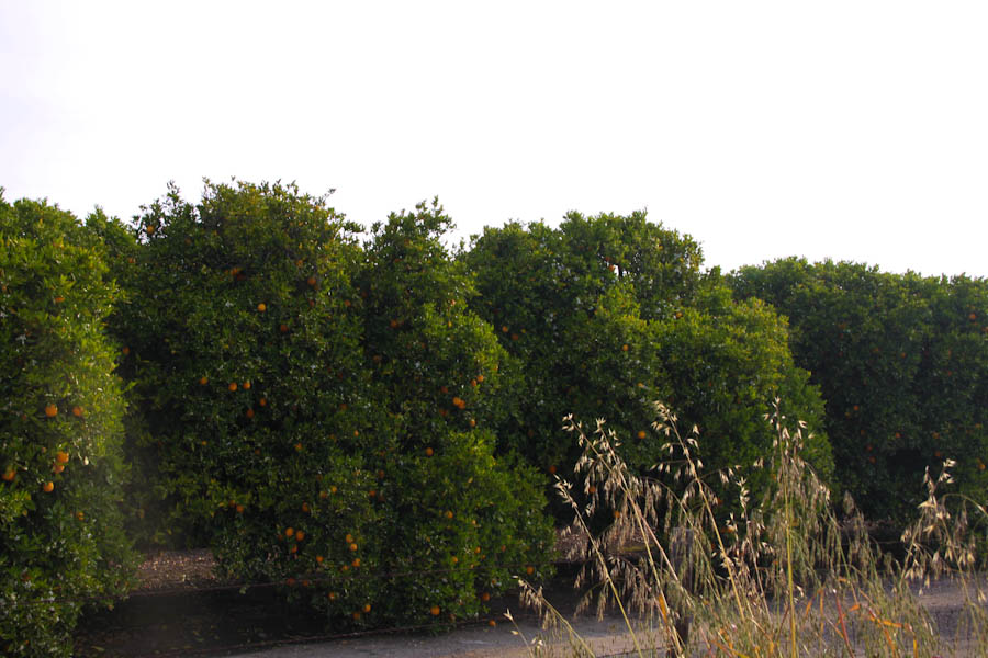 http://travel.frankazoid.com/http://reports.frankazoid.com/201004_CA/IMG_7983.jpg