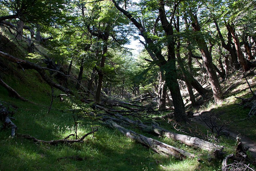 http://reports.frankazoid.com/201102_patagonia/IMG_1742.jpg
