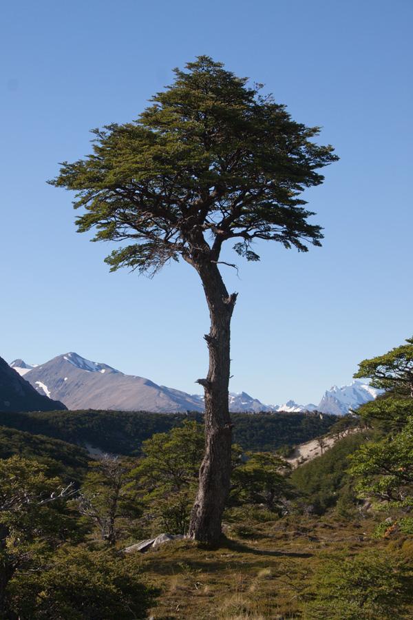 http://reports.frankazoid.com/201102_patagonia/IMG_1774.jpg
