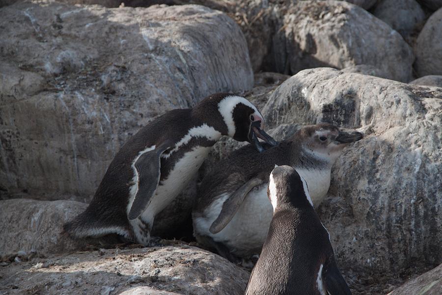 http://reports.frankazoid.com/201102_penguins/IMG_0012.jpg