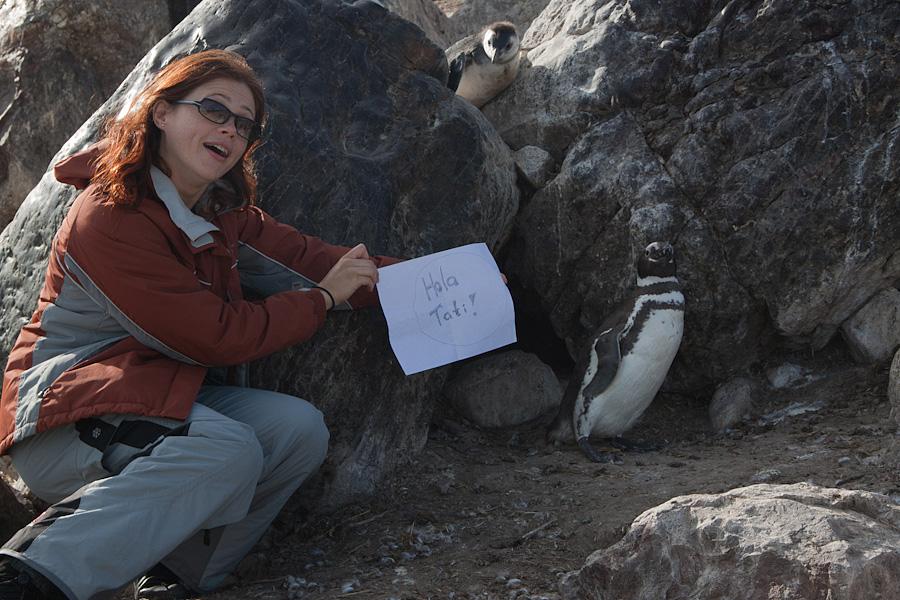 http://reports.frankazoid.com/201102_penguins/IMG_0025.jpg