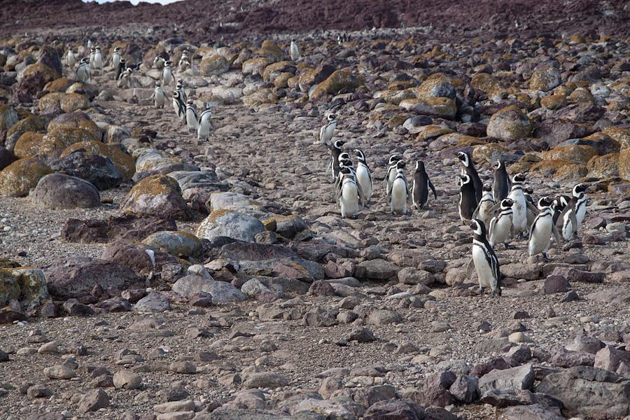 http://reports.frankazoid.com/201102_penguins/IMG_0041.jpg