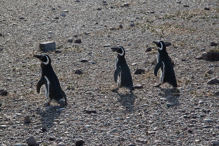 http://reports.frankazoid.com/201102_penguins/IMG_0063.jpg