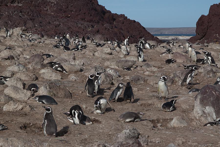 http://reports.frankazoid.com/201102_penguins/IMG_0067.jpg