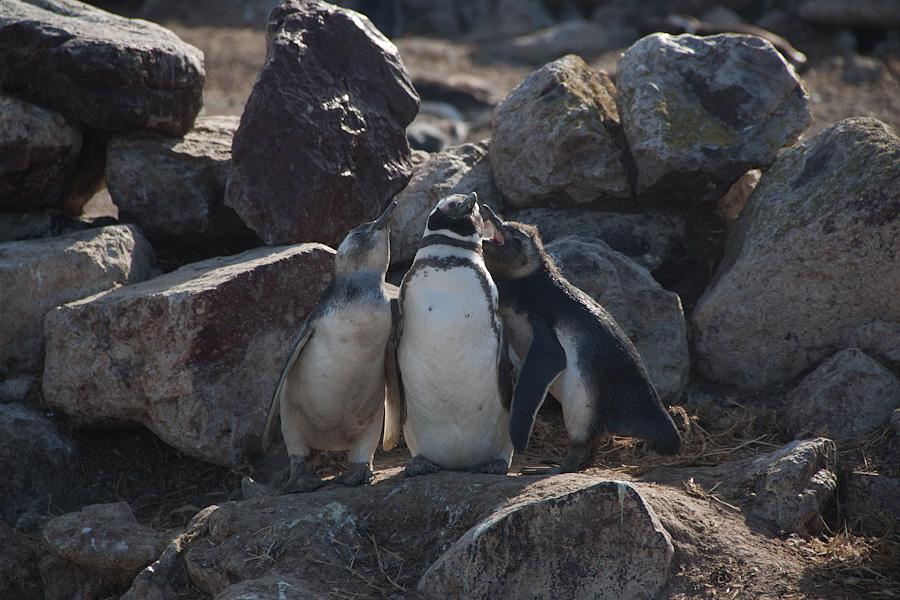 http://reports.frankazoid.com/201102_penguins/IMG_0086.jpg