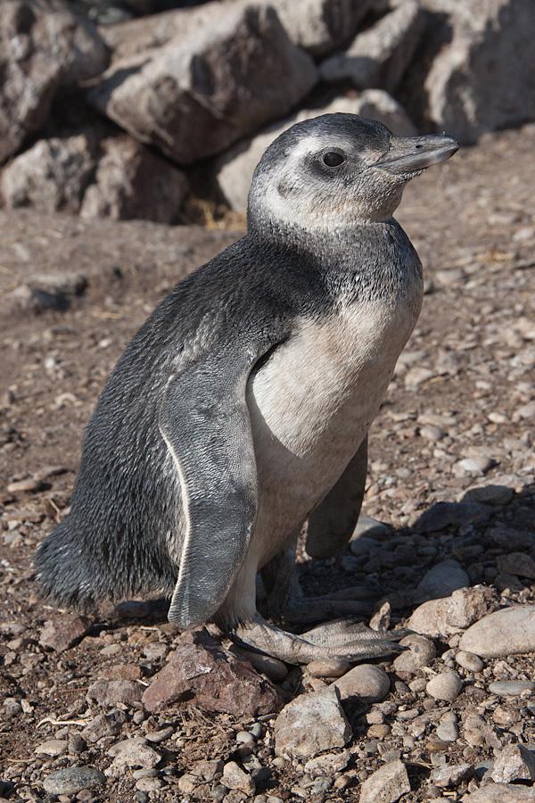 http://reports.frankazoid.com/201102_penguins/IMG_0117.jpg