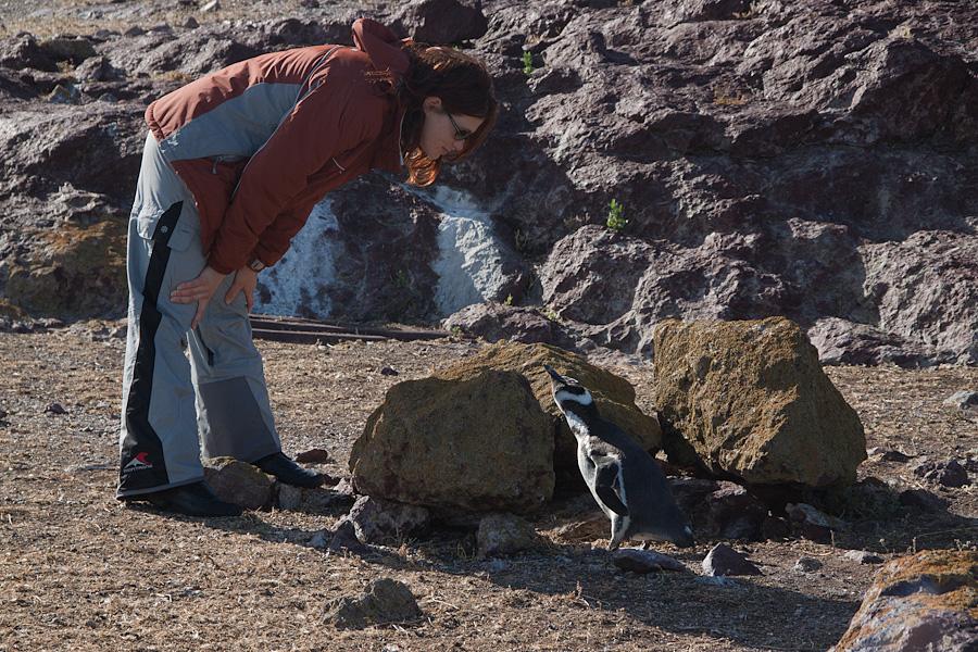 http://reports.frankazoid.com/201102_penguins/IMG_0136.jpg
