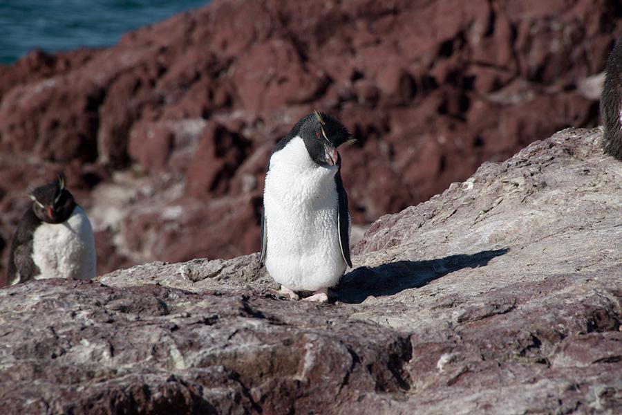 http://reports.frankazoid.com/201102_penguins/IMG_0201.jpg