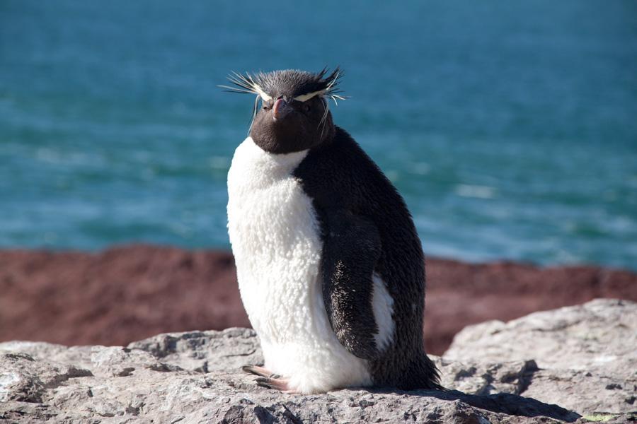 http://reports.frankazoid.com/201102_penguins/IMG_0243.jpg
