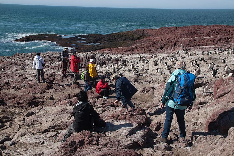 http://reports.frankazoid.com/201102_penguins/IMG_0258.jpg