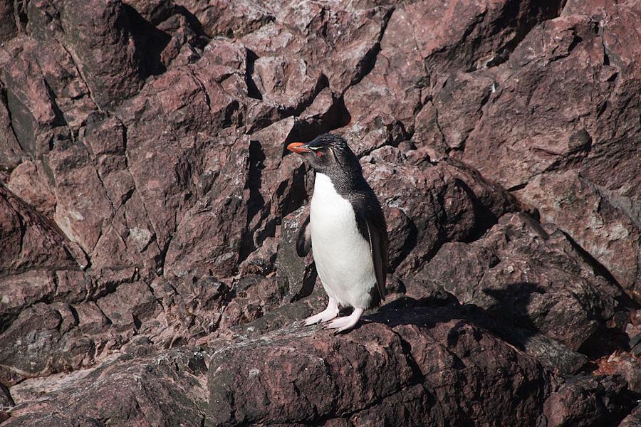 http://reports.frankazoid.com/201102_penguins/IMG_0289.jpg