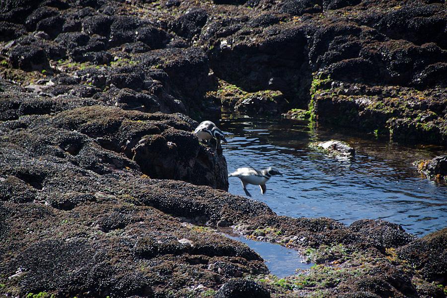 http://reports.frankazoid.com/201102_penguins/IMG_0306.jpg