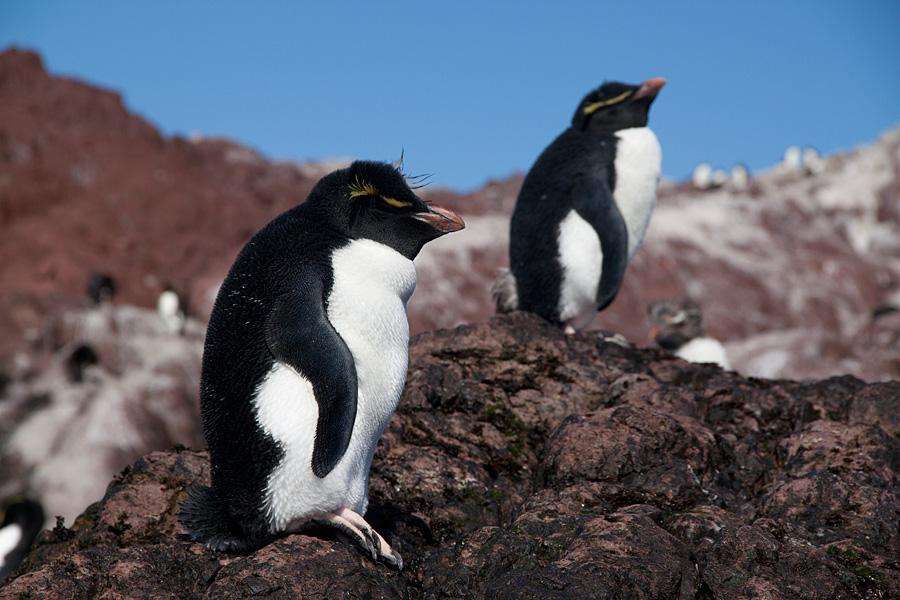 http://reports.frankazoid.com/201102_penguins/IMG_0400.jpg