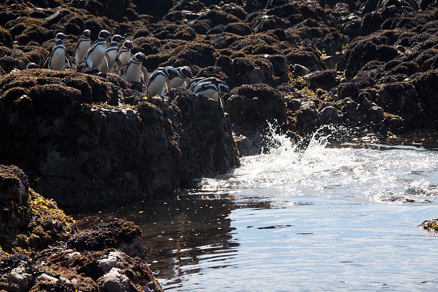 http://reports.frankazoid.com/201102_penguins/IMG_0444.jpg
