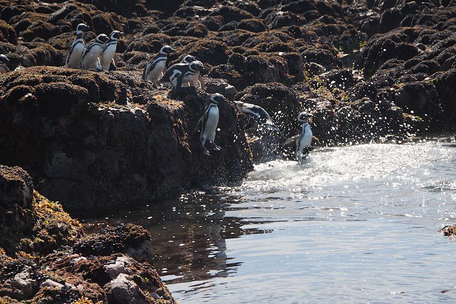 http://reports.frankazoid.com/201102_penguins/IMG_0447.jpg