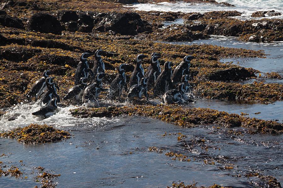 http://reports.frankazoid.com/201102_penguins/IMG_0452.jpg