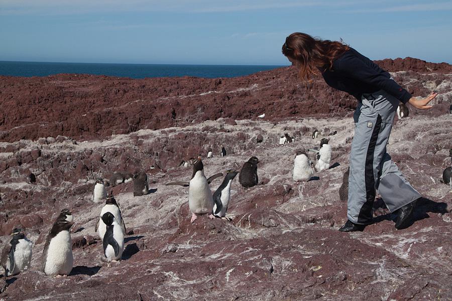 http://reports.frankazoid.com/201102_penguins/IMG_0459.jpg