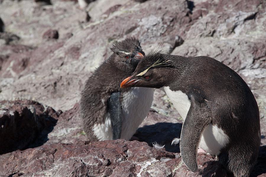 http://reports.frankazoid.com/201102_penguins/IMG_0495.jpg