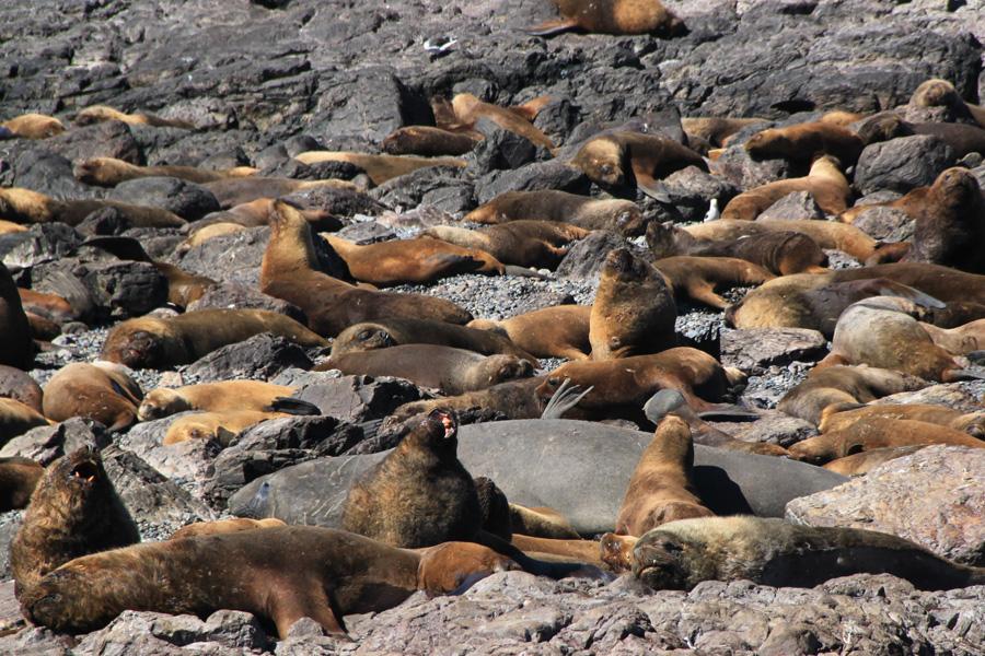 http://reports.frankazoid.com/201102_penguins/IMG_0529.jpg