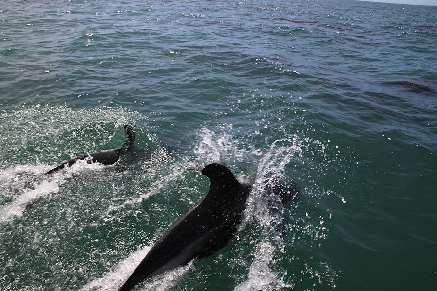 http://reports.frankazoid.com/201102_penguins/IMG_0553.jpg