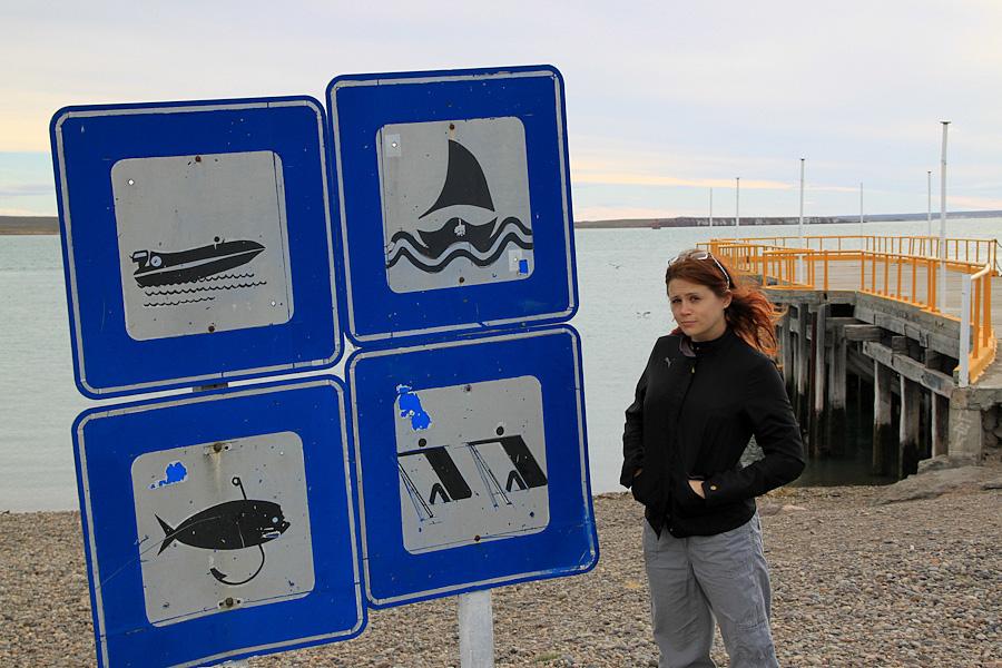 http://reports.frankazoid.com/201102_penguins/IMG_9651.jpg