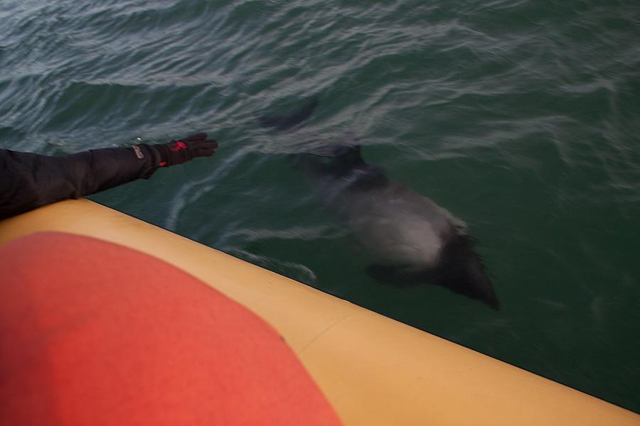 http://reports.frankazoid.com/201102_penguins/IMG_9790.jpg