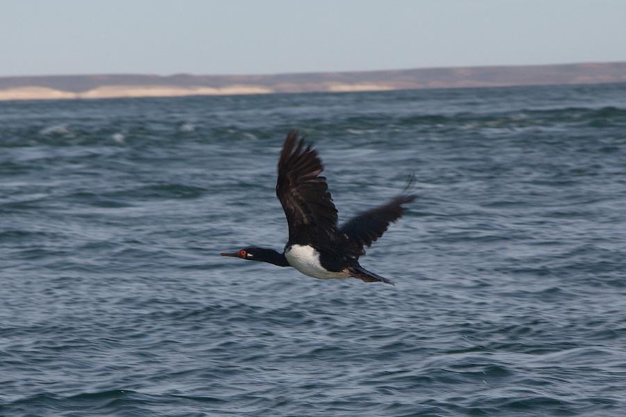 http://reports.frankazoid.com/201102_penguins/IMG_9818.jpg