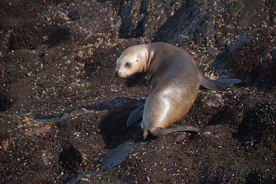http://reports.frankazoid.com/201102_penguins/IMG_9847.jpg
