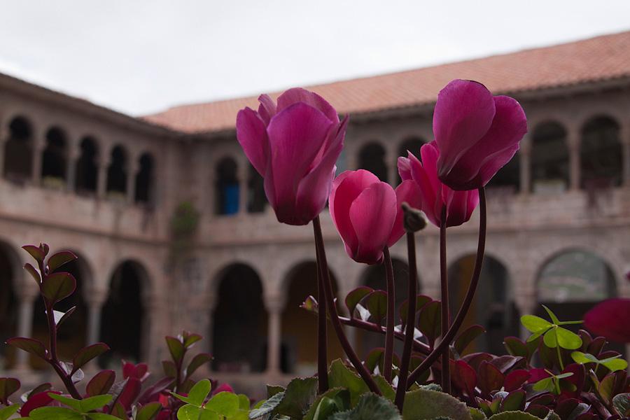 http://reports.frankazoid.com/201103_cuzco/IMG_2315.jpg