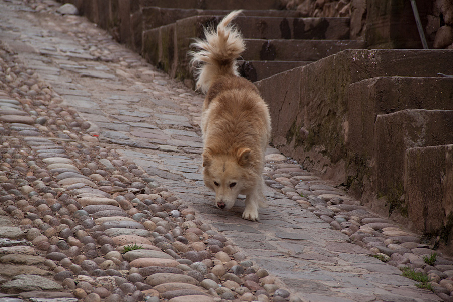 http://reports.frankazoid.com/201103_cuzco/IMG_2355.jpg