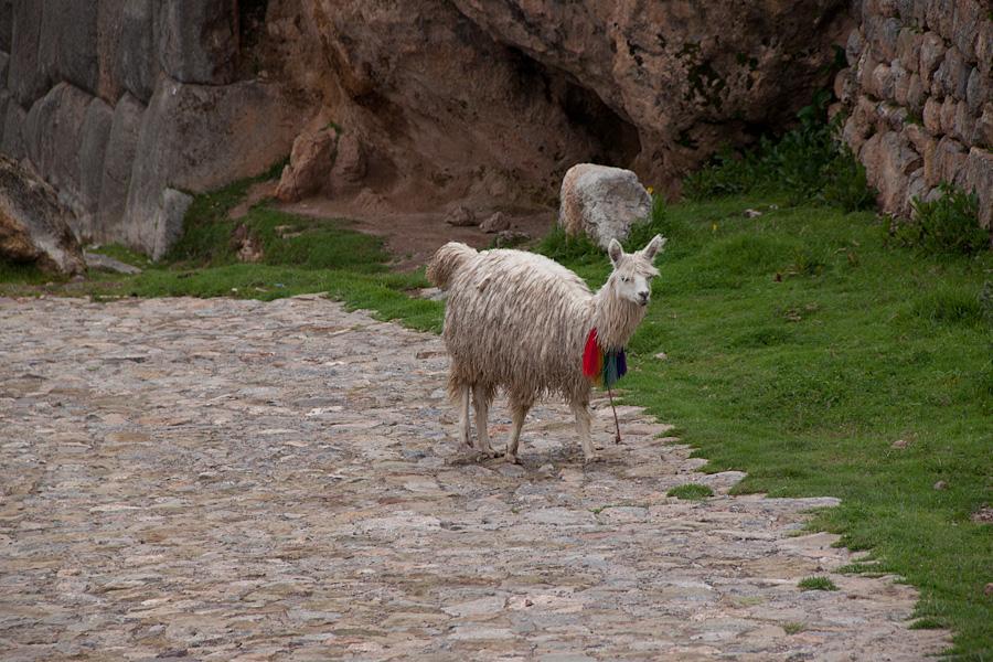 http://reports.frankazoid.com/201103_cuzco/IMG_2453.jpg