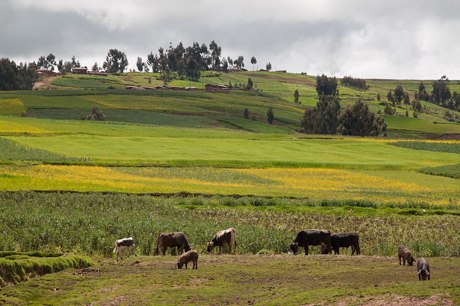 http://reports.frankazoid.com/201103_cuzco/IMG_2519.jpg