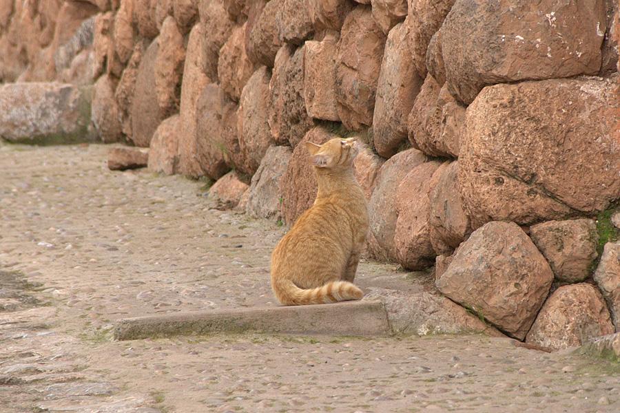 http://reports.frankazoid.com/201103_cuzco/IMG_2715.jpg