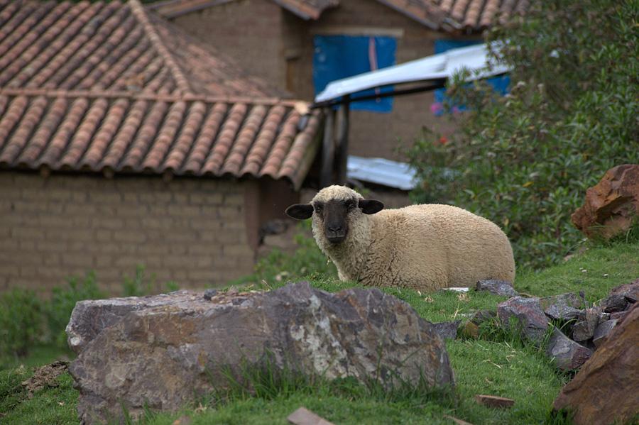 http://reports.frankazoid.com/201103_cuzco/IMG_2815.jpg