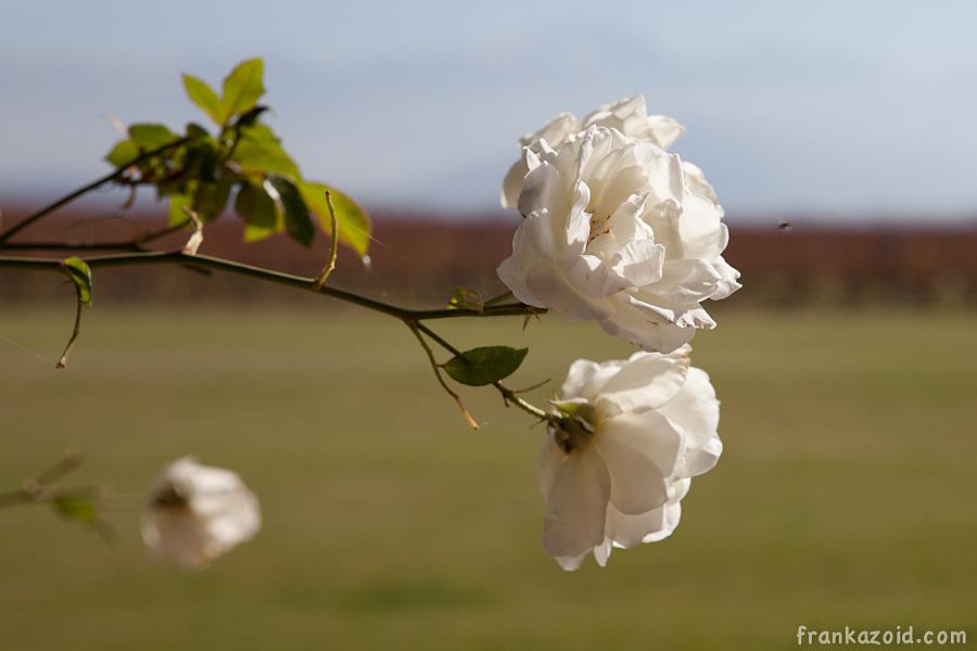http://reports.frankazoid.com/201105_mendoza/_MG_6012.jpg