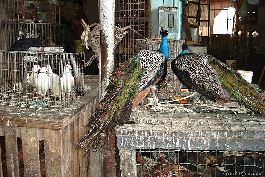http://reports.frankazoid.com/201107_salvador/DSC01288.jpg
