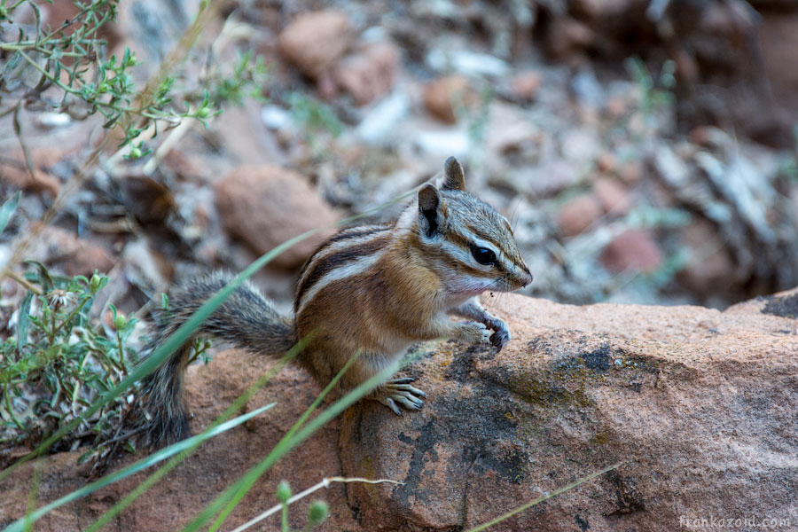 Zion National Park 2014 photo