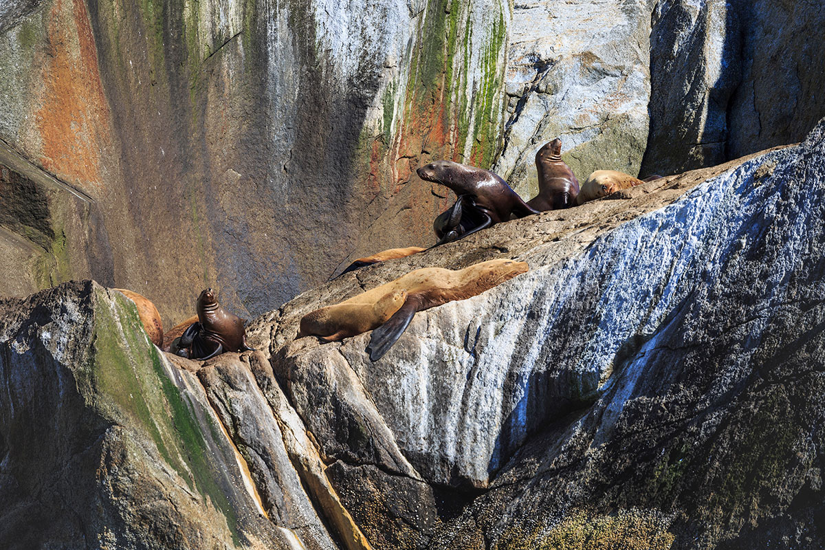 Kenai Fjords seals on the rocks