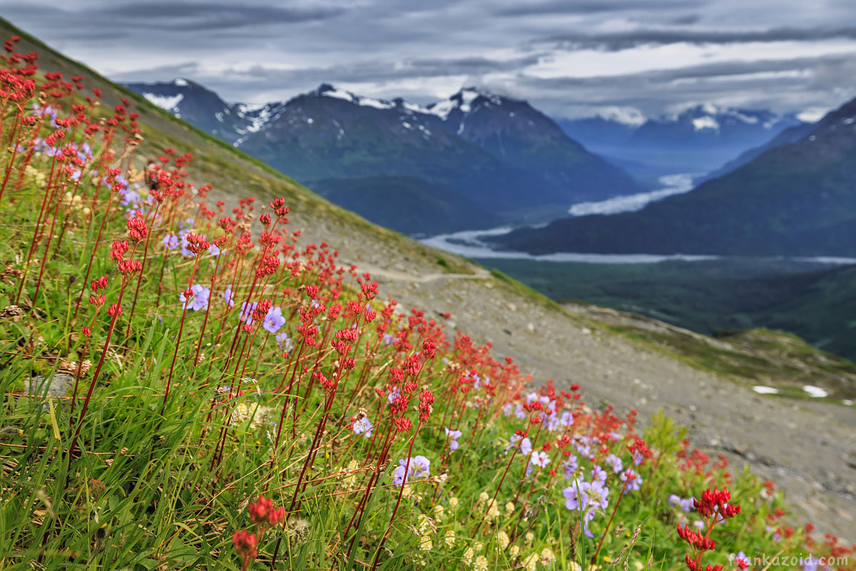 Flowers near the glacier