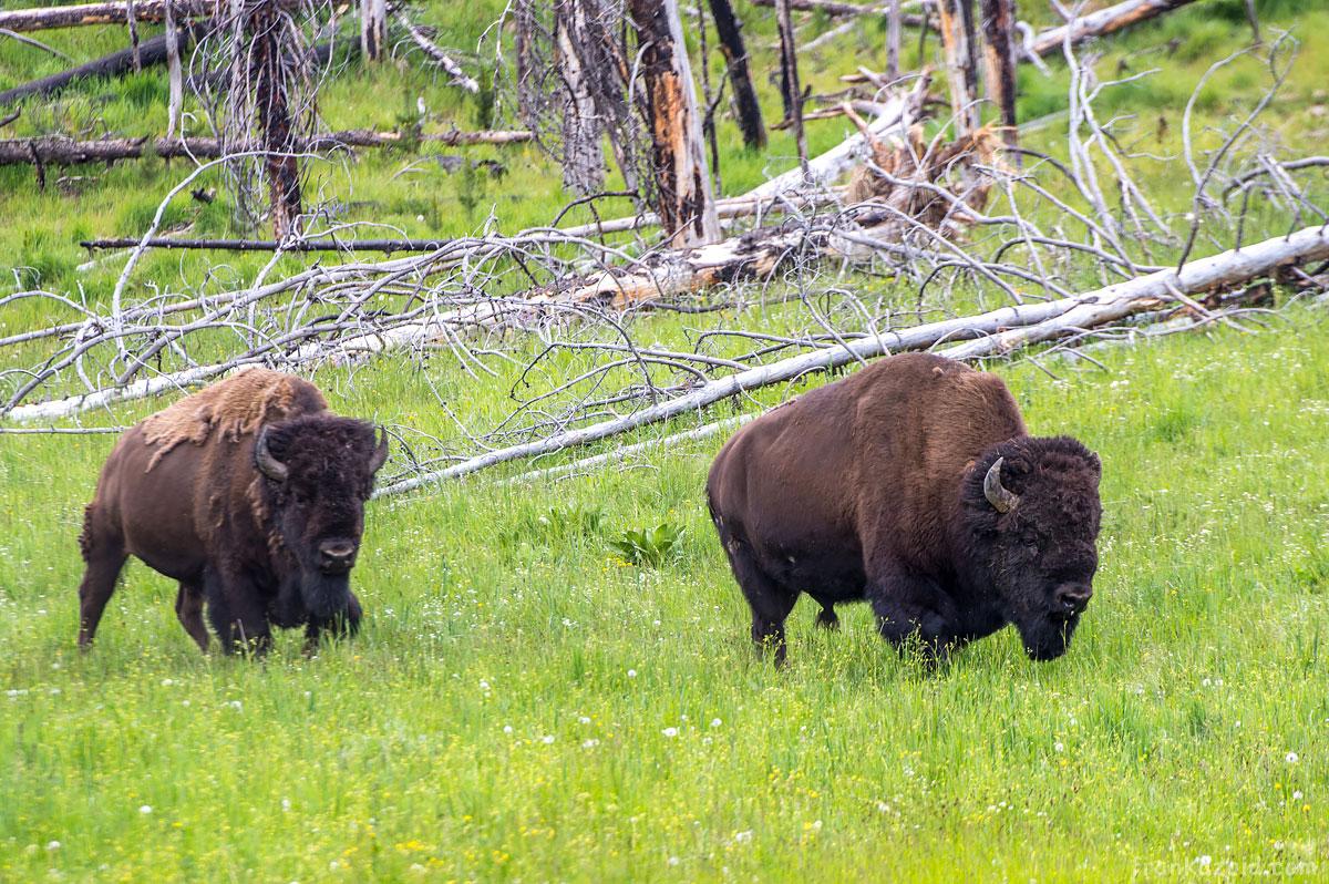 Big Alaska Trip, part 7: Wyoming, USA 2017 photo