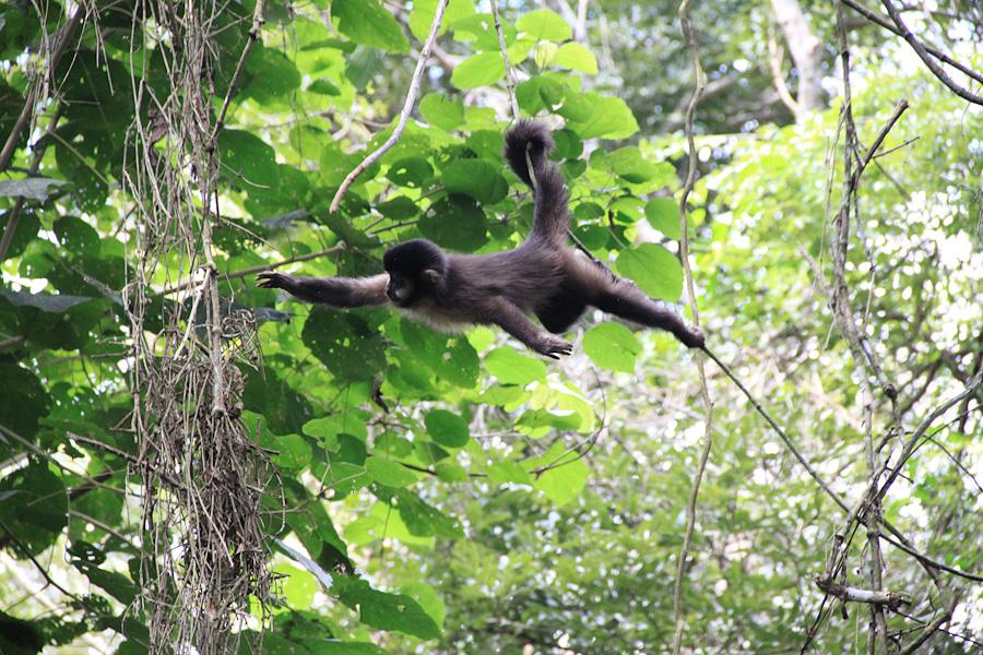 http://reports.frankazoid.com/201005_Iguazu/IMG_1527.jpg