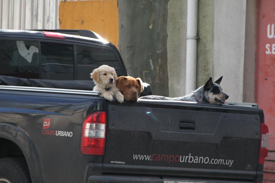 http://travel.frankazoid.com/https://reports.frankazoid.com/201008_Uruguay/IMG_5087.jpg