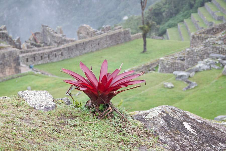 https://reports.frankazoid.com/201103_machupicchu/_MG_3121.jpg