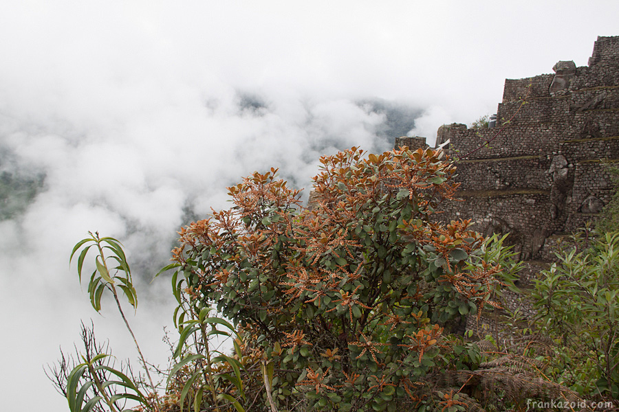 https://reports.frankazoid.com/201103_machupicchu/_MG_3413.jpg