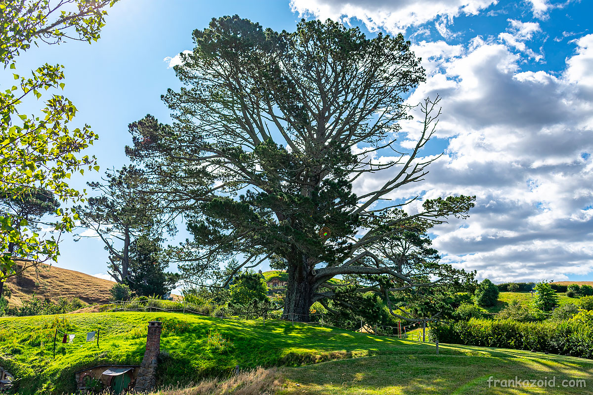 Trip to New Zealand, Auckland, Kauri tree and Hobbiton Movie Set, year 2020