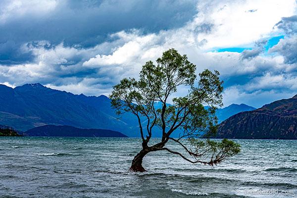 Trip to New Zealand, seal colony, pancake rocks, saint jozef, glacier, wanaka, year 2020